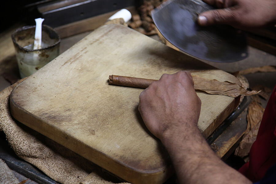 A cigar being hand-rolled with filler tobacco inside it.